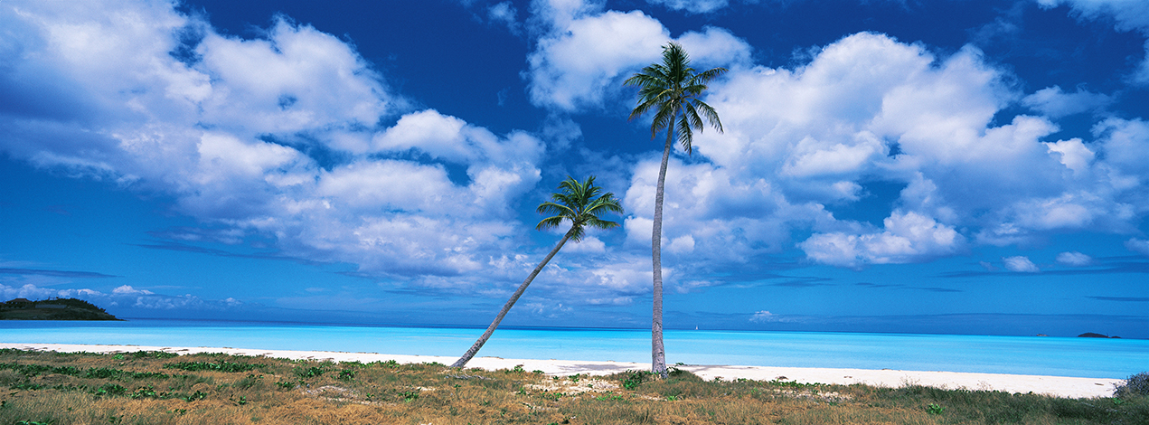 G13 - Two Palms on an Antigua Beach