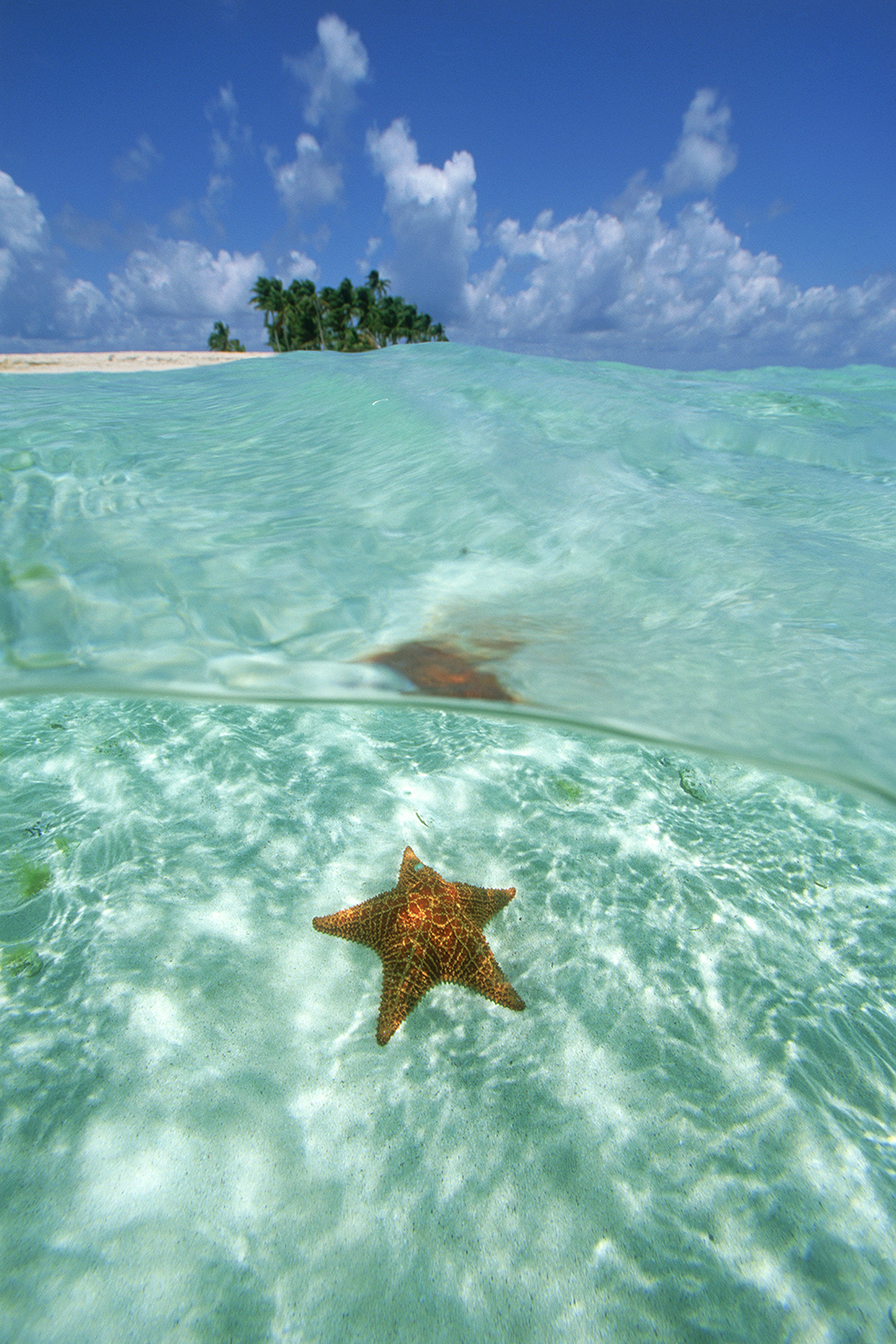 G197 - Starfish in Belize